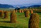 Bales of hay in Pieniny Mountains region, Malopolskie, Poland, Europe